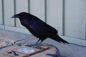 raven_stwells