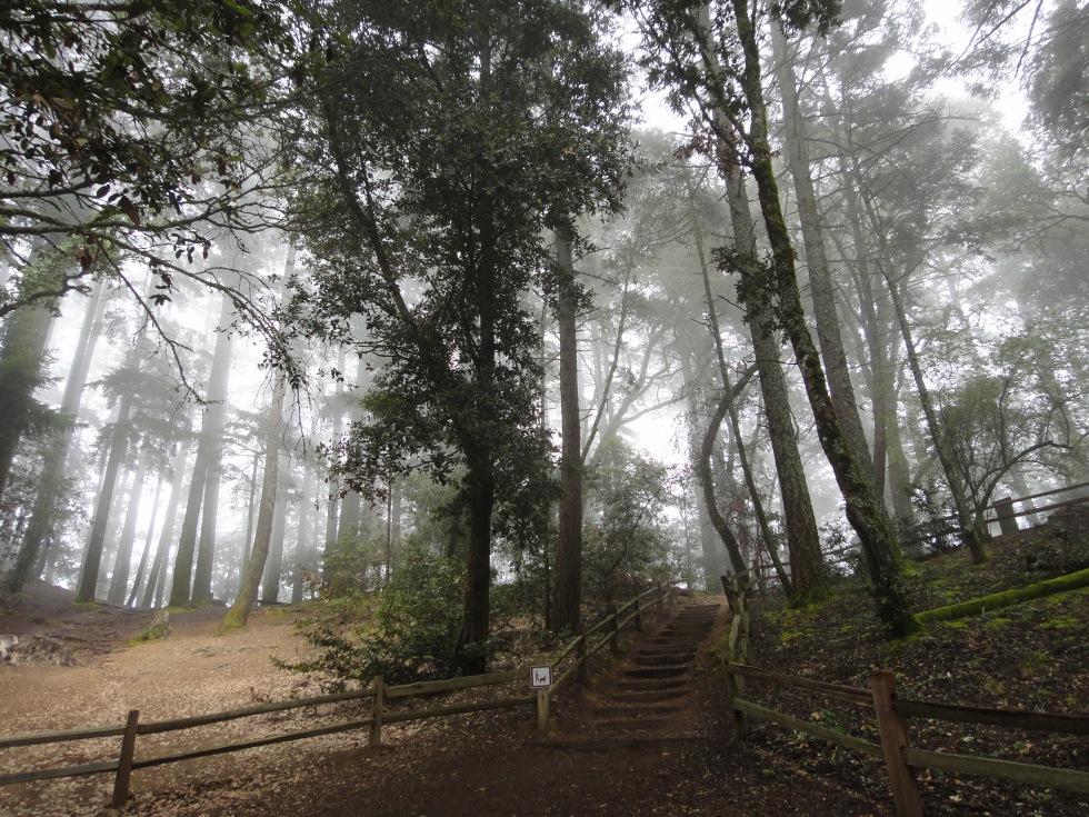 trail1_fg