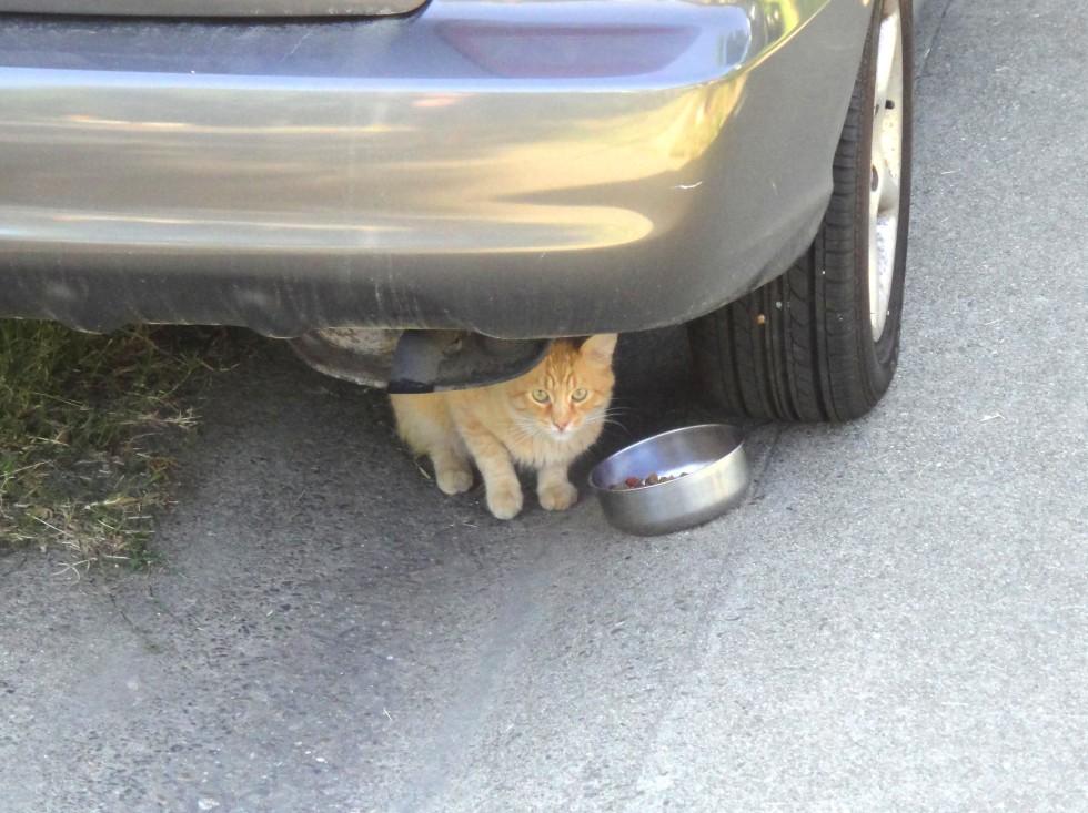 yellboy_car_susp