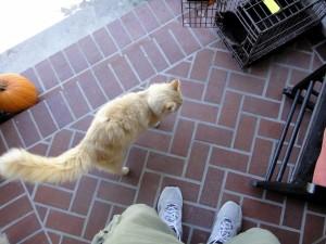 yelboy_top-cage-porch